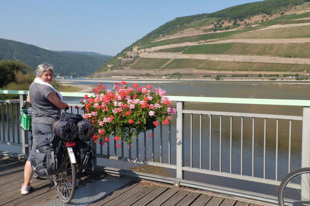 Terraced hillside vineyards
