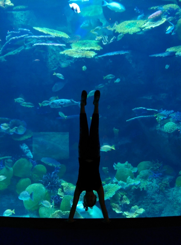 Handstand in Sea Life Ocean World Bangkok