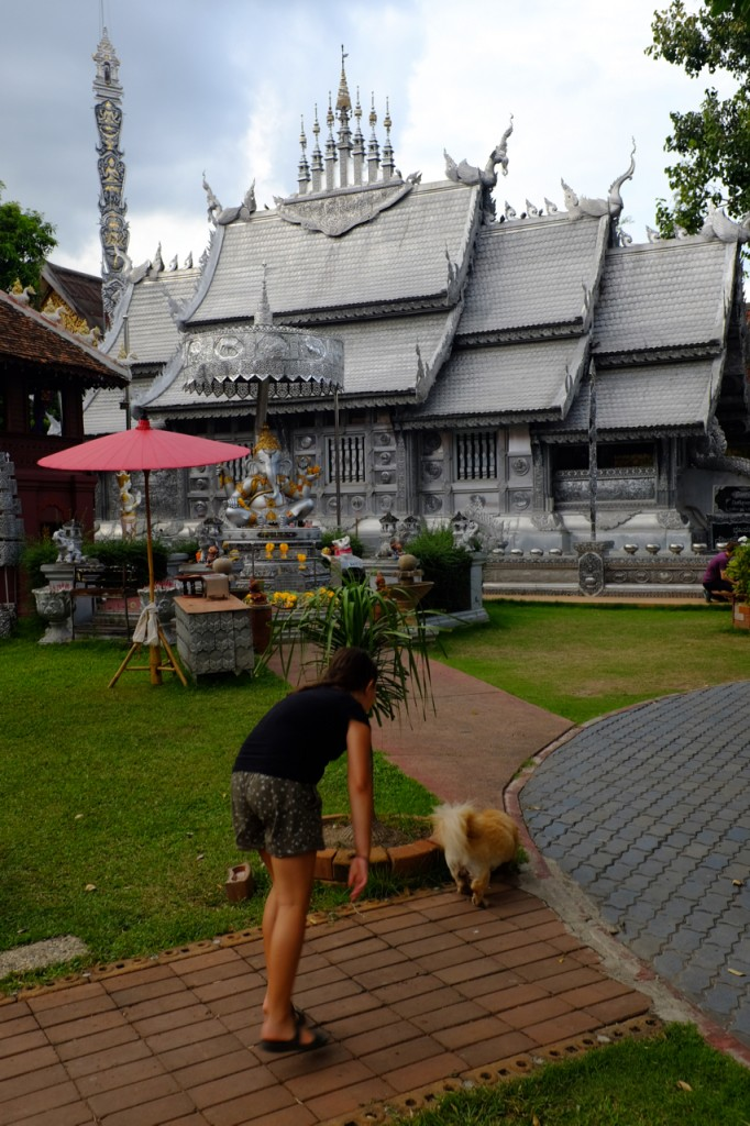 Where there are temples there are dogs to pet!
