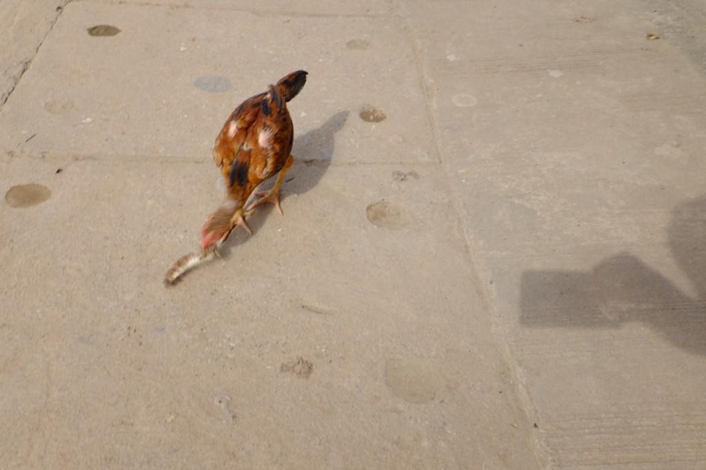Street chicken