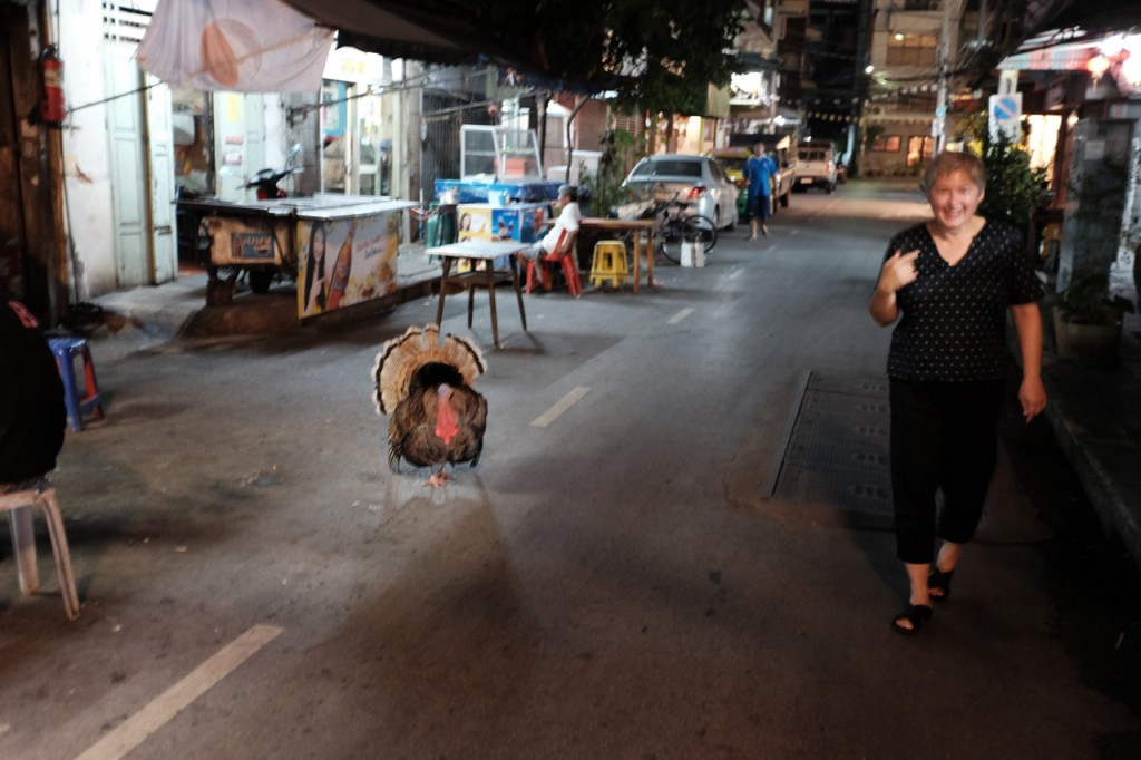 Welcome to Bangkok; where turkeys roam at night