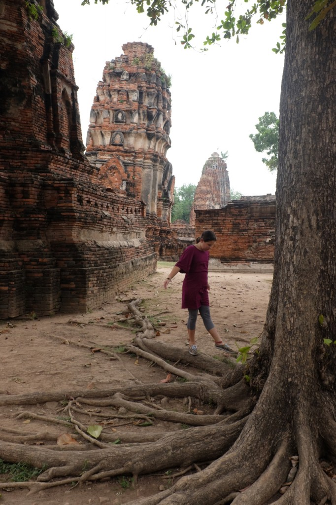 The roots of the old trees at Wat Mahathat in Ayutthaya make good balance beams.
