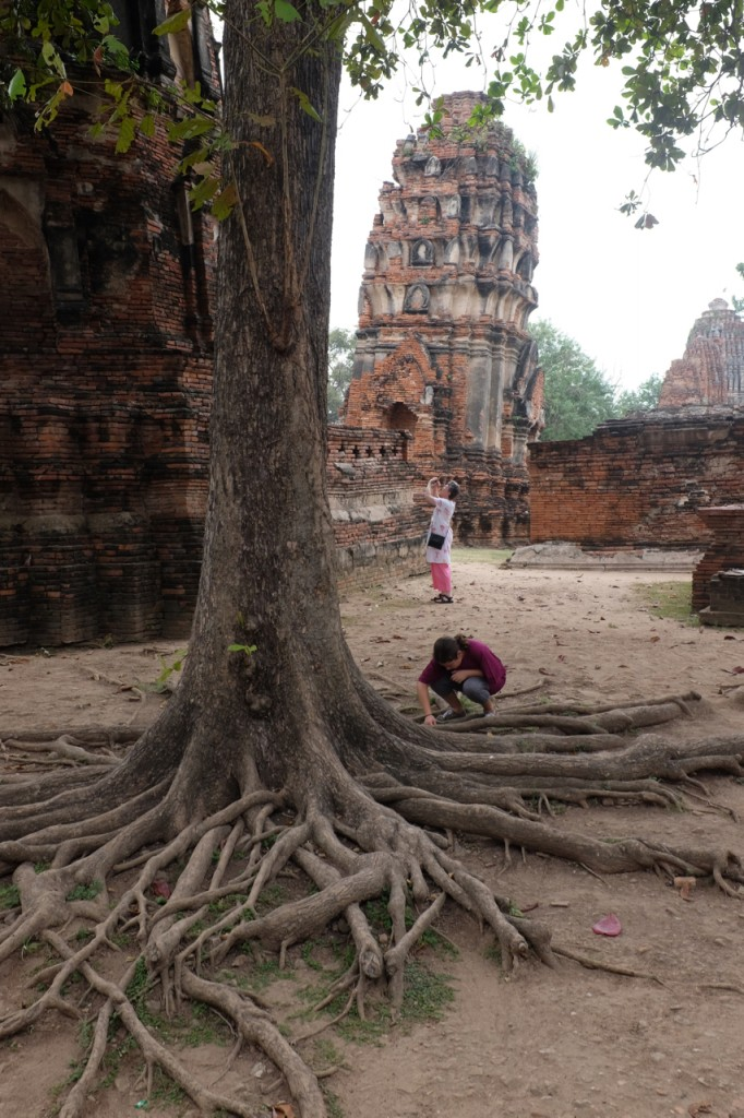 The trees in the temple have beautiful, exposed roots.