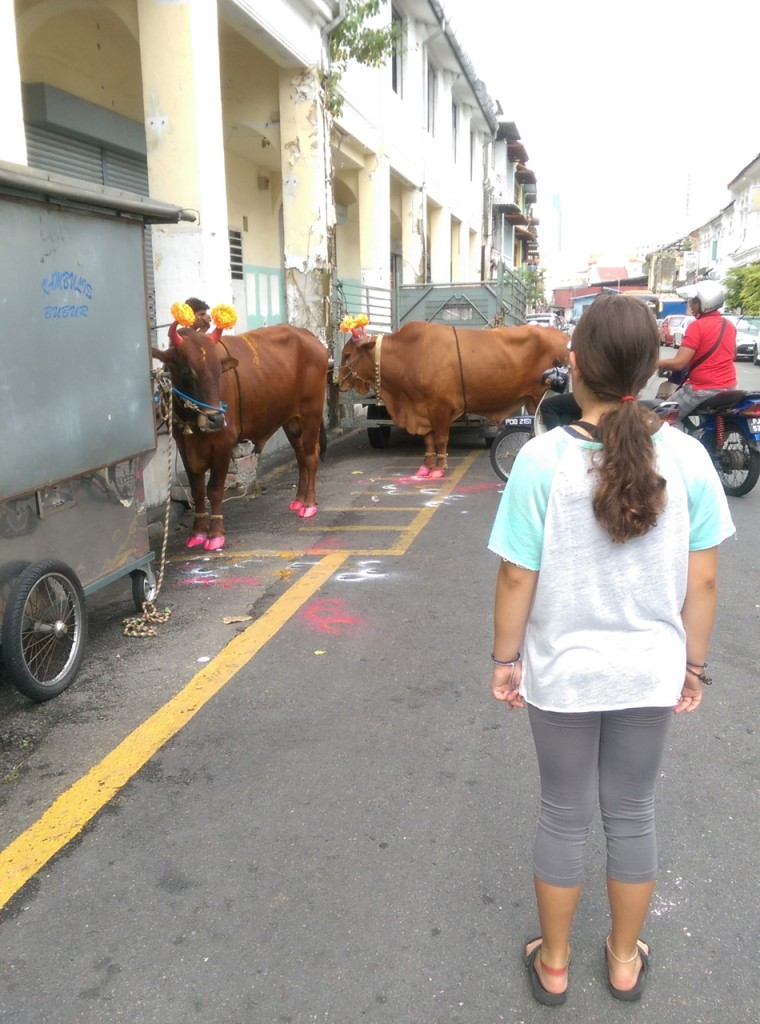 Cows getting decorated for Hindu festival
