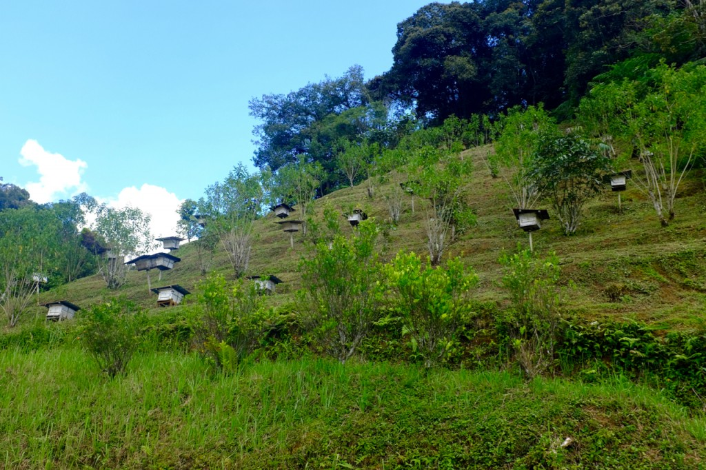 Hives on the hillside