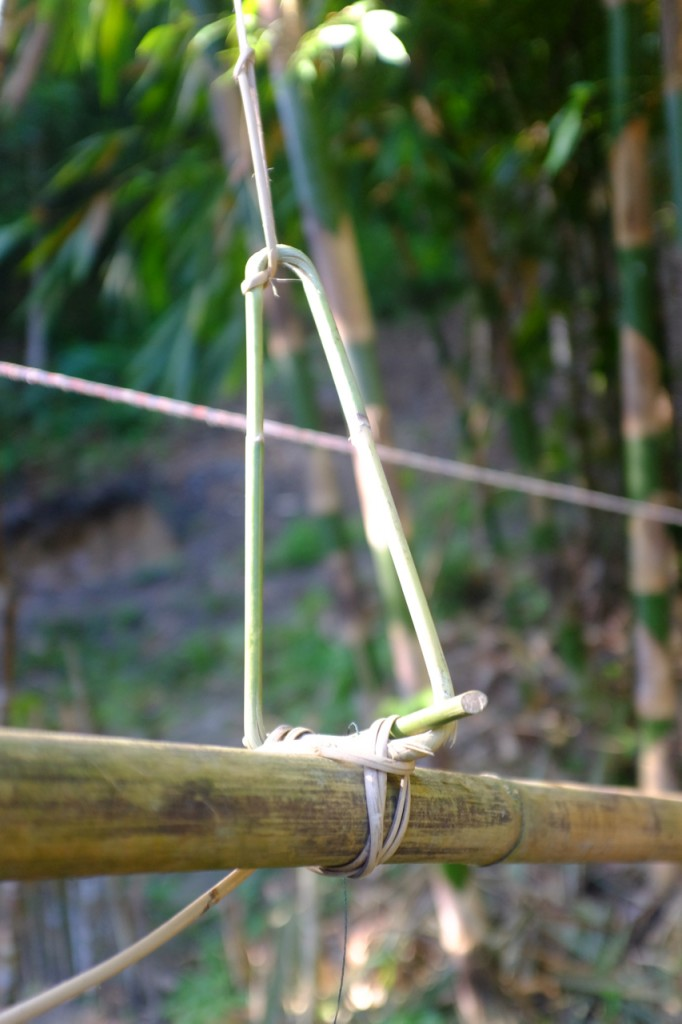 Detail of the snare on one of the traps. The rattan is actually quite stiff and has a sharp edge by design. It is connected to a small tree bent over as a powerful spring.