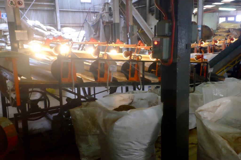 The sorting machine sorts leaves by size and drops them into large sacks.