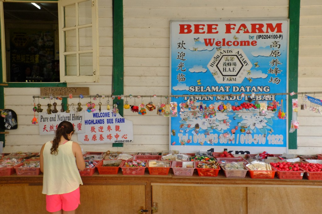 Visit to a bee farm