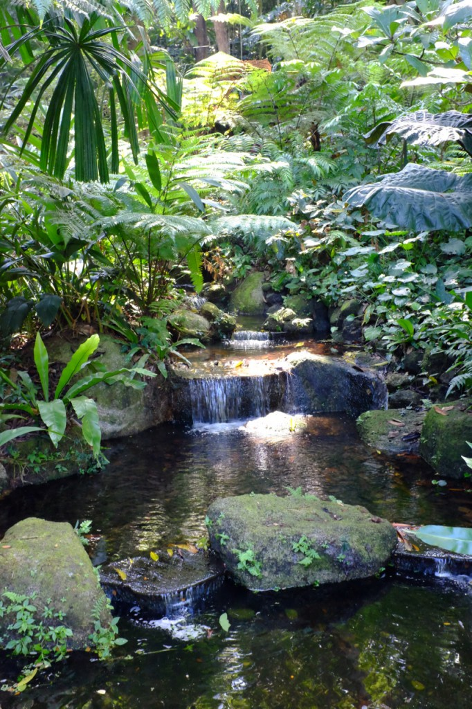 Waterfall in the Tropical Spice Garden