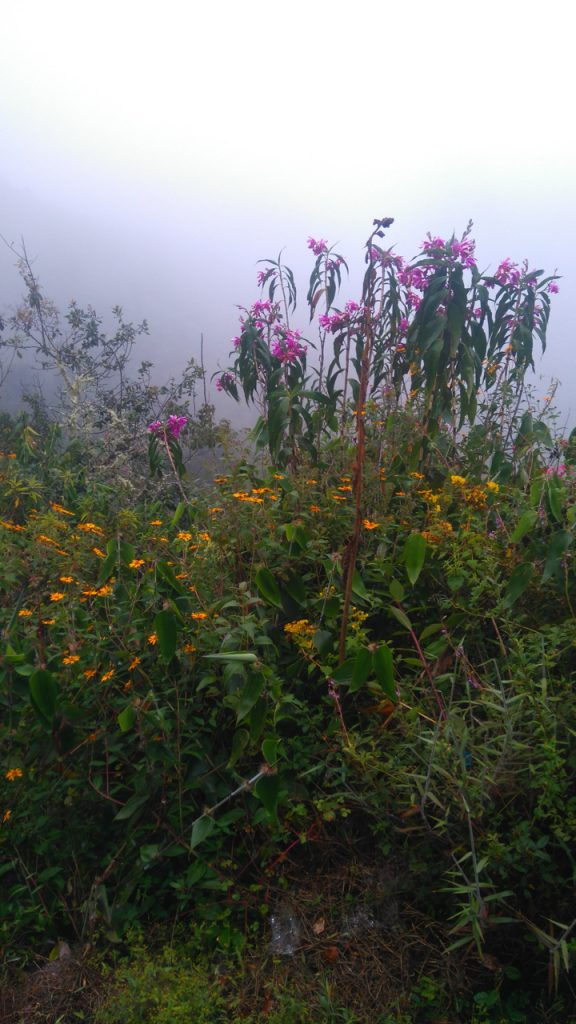 Pretty flowers at the trail's edge